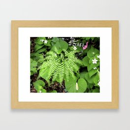 Maidenhair Fern, Adiantum Pedatum, And Friends Framed Art Print