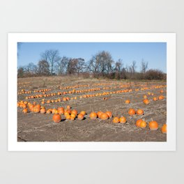Pumpkins All In A Row Art Print