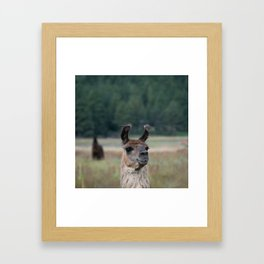 Llama Portrait - 1 Framed Art Print