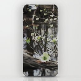 Dogwoods at the River iPhone Skin