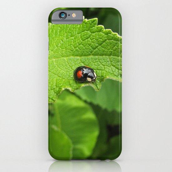 black ladybug I iPhone & iPod Case