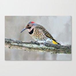 Fancy Fellow: Northern Flicker Woodpecker Canvas Print