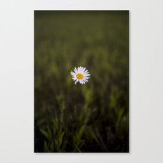 I've been longing for, daisies to push through the floor Canvas Print