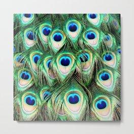 Peacock 13 Metal Print