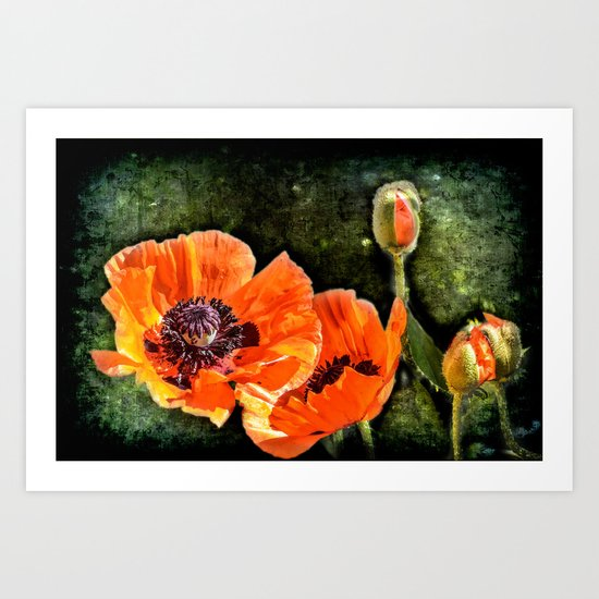 Oriental Poppies family Art Print