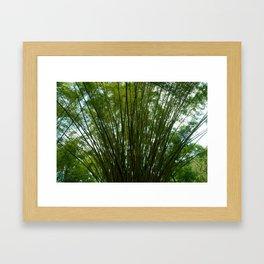 Giant Bamboo Framed Art Print