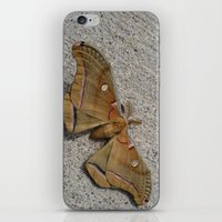moth iPhone & iPod Skins featuring Moth by Deb MacNeil
