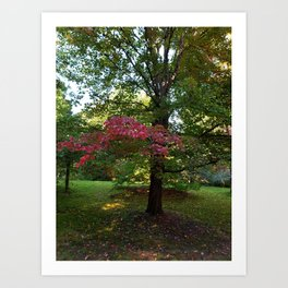Pink Leaves of Vancouver Art Print