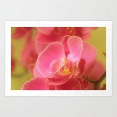 Pink Pastel 32 Art Print