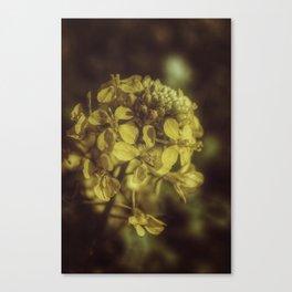 Yellow Soft Tones Canvas Print