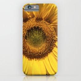 Sunflower - Helianthus annuus iPhone Case