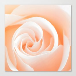 Rose's heart I - Beautiful roses flower in pink Canvas Print