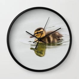Duckling swimming Wall Clock