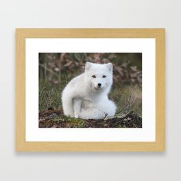 Polar Fox by Anne Elisabeth Framed Art Print