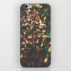 Among the leaves iPhone & iPod Skin