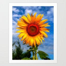 Blooming Sunflower  Art Print