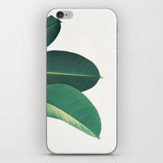 Rubber Fig Leaves II iPhone & iPod Skin