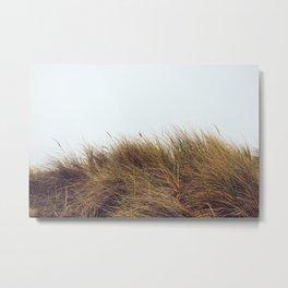 Pismo Dune Grass Metal Print