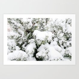 Pine Needles in the Snow Art Print