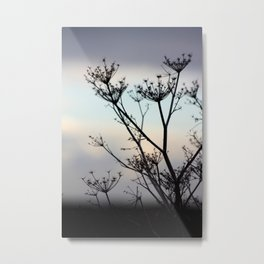 Fennel by sunset Metal Print