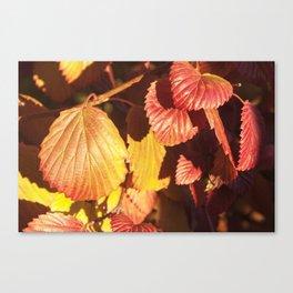 Autumn Leaves Photography Print Canvas Print