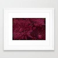 burgundy Framed Art Prints featuring Burgundy Chrysanthemums by Judy Palkimas