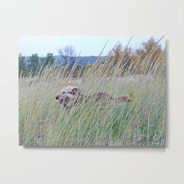 Dog In Beach Grass Metal Print