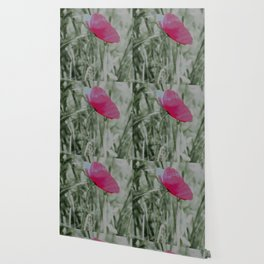 Pink poppy in a field Wallpaper