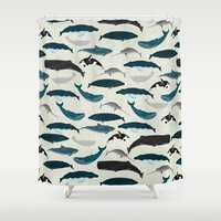Whales and Porpoises sea life ocean animal nature animals marine biologist Andrea Lauren Shower Curtain