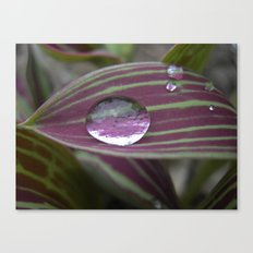 big water drop IV Canvas Print