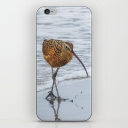 Long Billed Curlew iPhone Skin