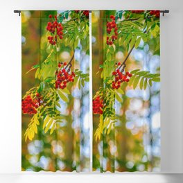 Bunches of rowan berries Blackout Curtain