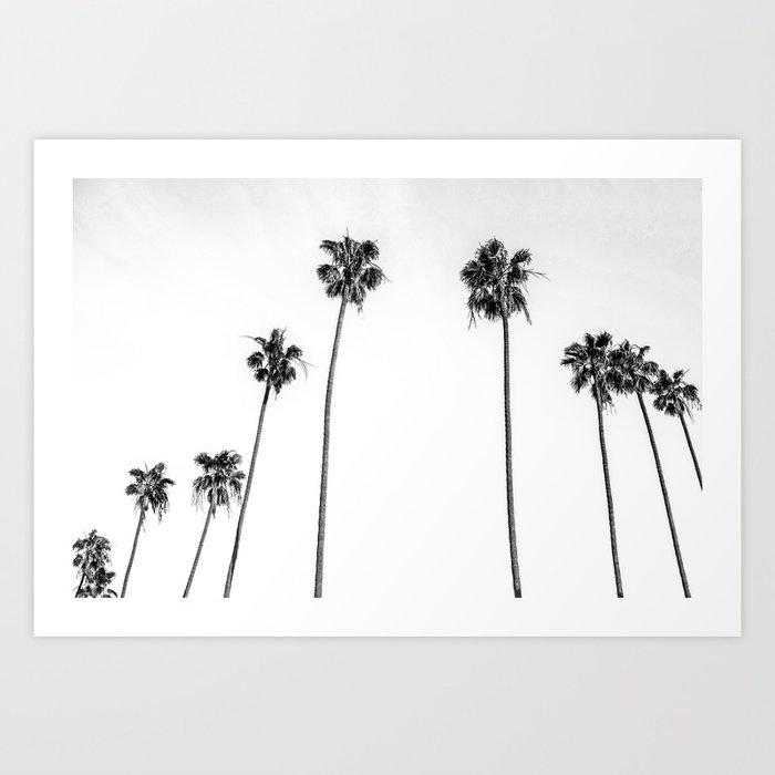 Black + White Palms Kunstdrucke