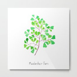 Maiden hair fern Metal Print