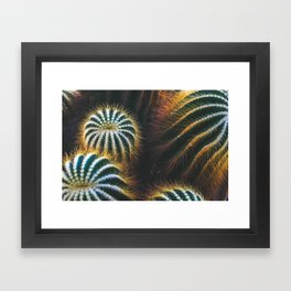 Botanical Gardens - Cactus #667 Framed Art Print