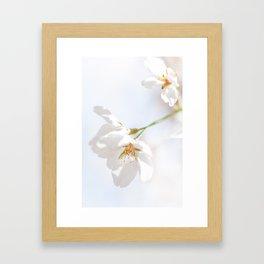 Sakura Blooming Framed Art Print