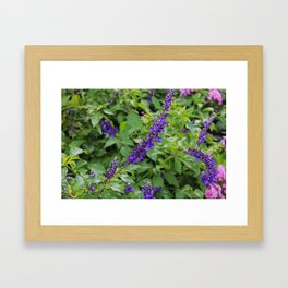 Indifference in Purple Framed Art Print