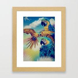 The Three Macaws Framed Art Print
