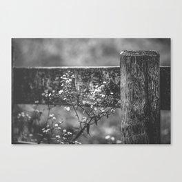 Rustic Wildflowers Canvas Print