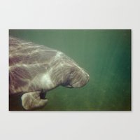 manatee Canvas Prints featuring Manatee by Twilight Wolf