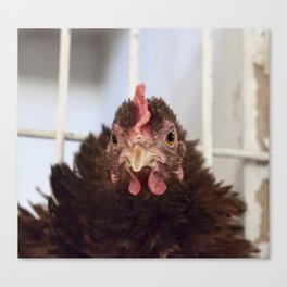 The Little Red Hen Canvas Print