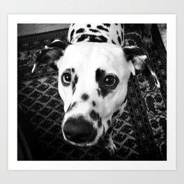 Daso the Dog Art Print
