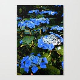 Pretty Blue Hydrangeas Canvas Print