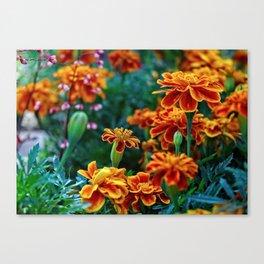 Marigolds in Garden Canvas Print