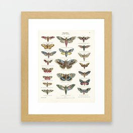 Vintage Moth Chart Framed Art Print