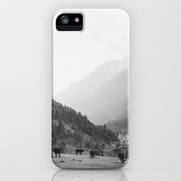 Grazing cattle, Kashmir, India iPhone Case