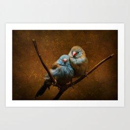 Male and Female Cordon Bleu Canaries Art Print