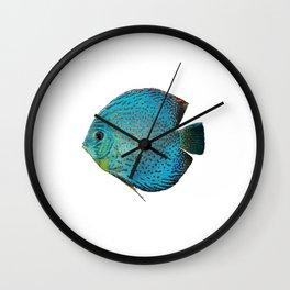 Discus Discusfish Aquarium Cichlid Wall Clock