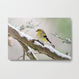 Balancing Act (American Goldfinch) Metal Print