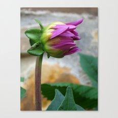 flor Canvas Print